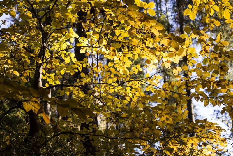 Cena bonita do outono, floresta colorida nas montanhas imagens de stock