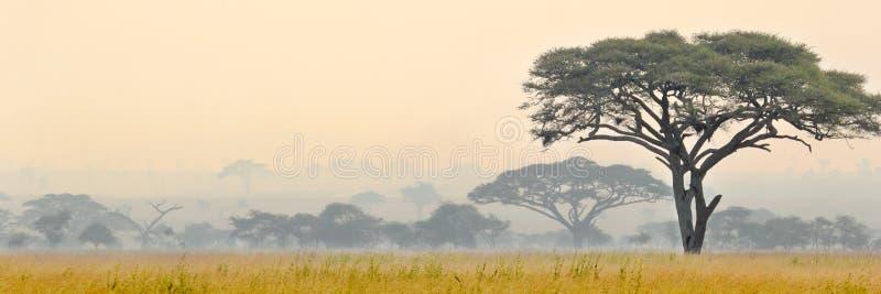 Cena bonita do parque nacional de Serengeti imagem de stock