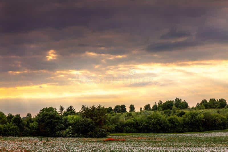 Cena calma da natureza com grama no primeiro plano e no s do nivelamento fotos de stock royalty free