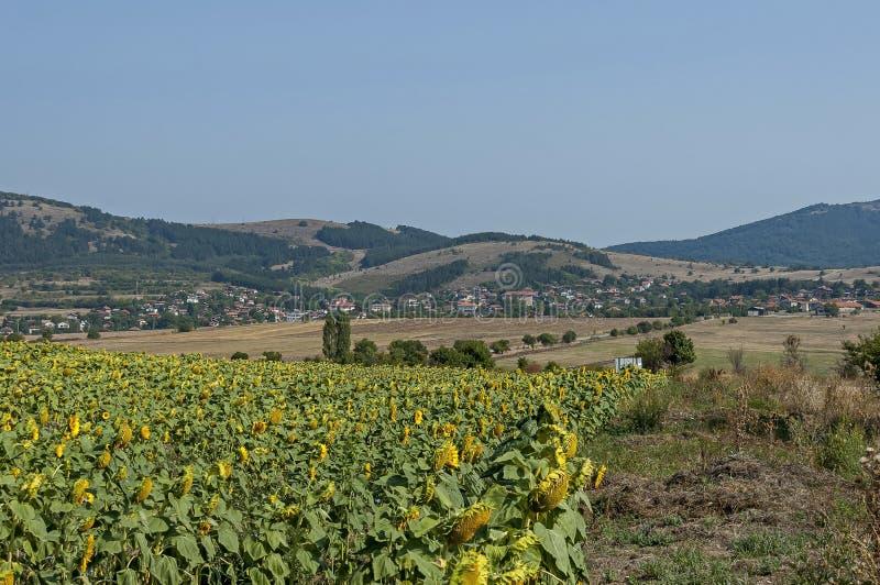 Cena com campo do girassol na parte dianteira e vista para a vila de Bailovo, montanha do gora de Sredna fotos de stock