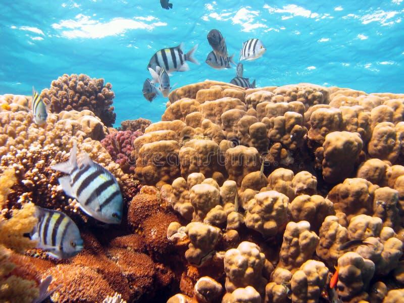 Cena coral imagem de stock