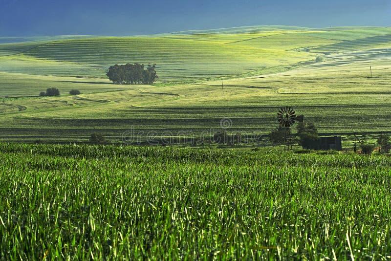 Cena da exploração agrícola fotografia de stock