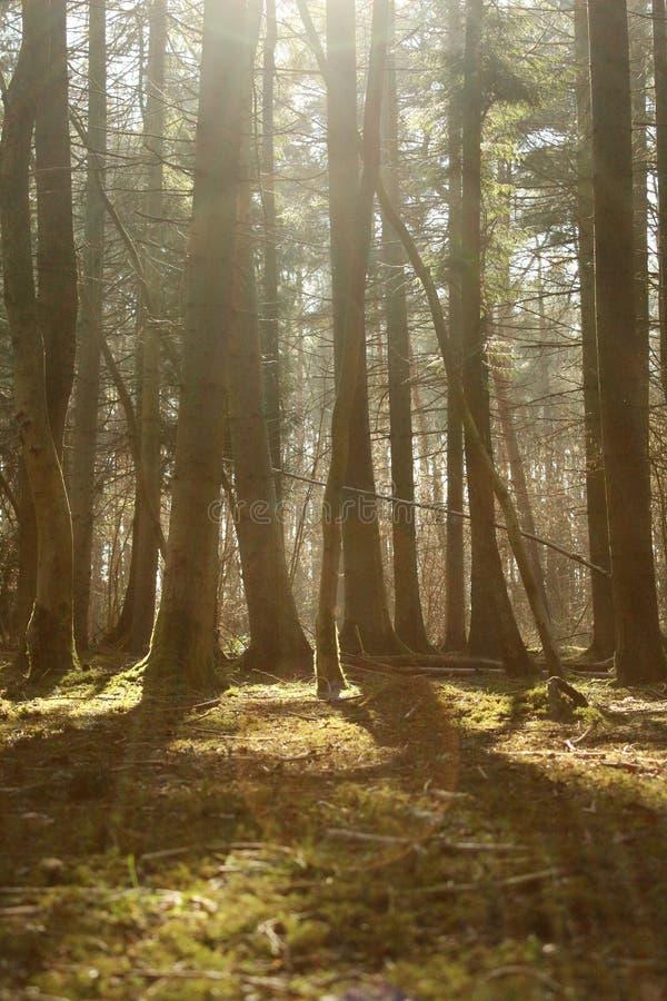 Cena da floresta com o alargamento borrado do primeiro plano e da lente fotografia de stock royalty free