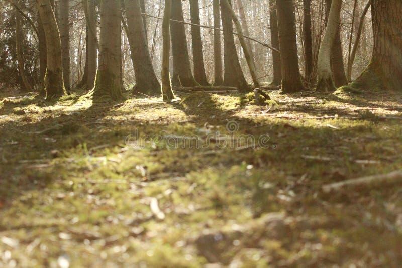 Cena da floresta com o alargamento borrado do primeiro plano e da lente imagens de stock