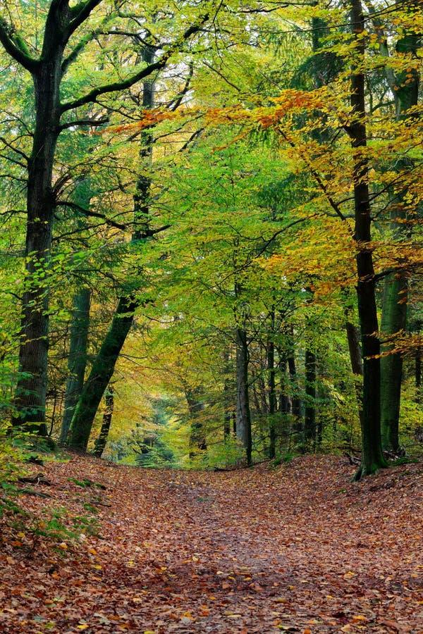 Cena da floresta da queda do outono com cores vibrantes fotografia de stock