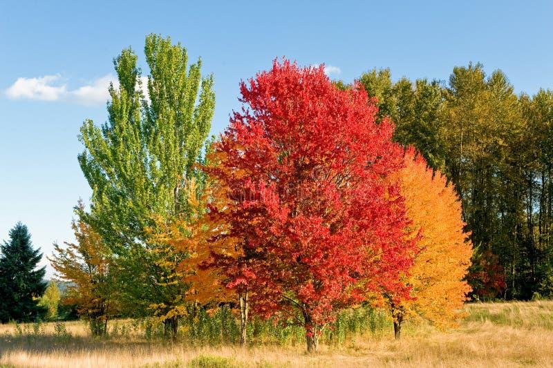 Cena da floresta do outono fotografia de stock royalty free