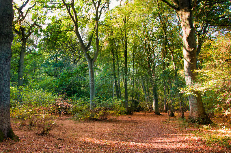 Cena da floresta na queda do outono. fotos de stock royalty free