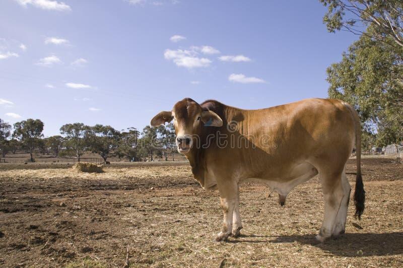 Cena da indústria da carne fotografia de stock royalty free