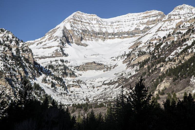 Cena da montanha de Utá Wasatch da neve e dos pinheiros da primavera imagens de stock