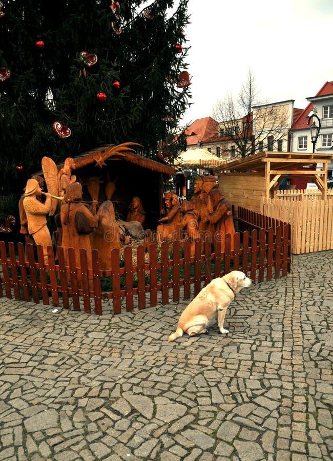 Cena da natividade do cão e do Natal imagem de stock