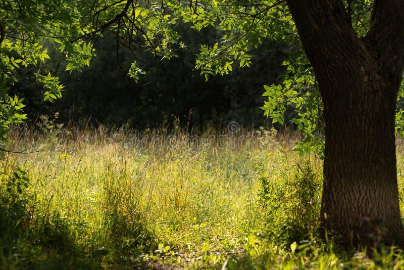 Cena da natureza da mola Paisagem bonita Parque com dentes-de-leão, grama verde, árvores e flores Fundo tranquilo, luz solar imagem de stock royalty free