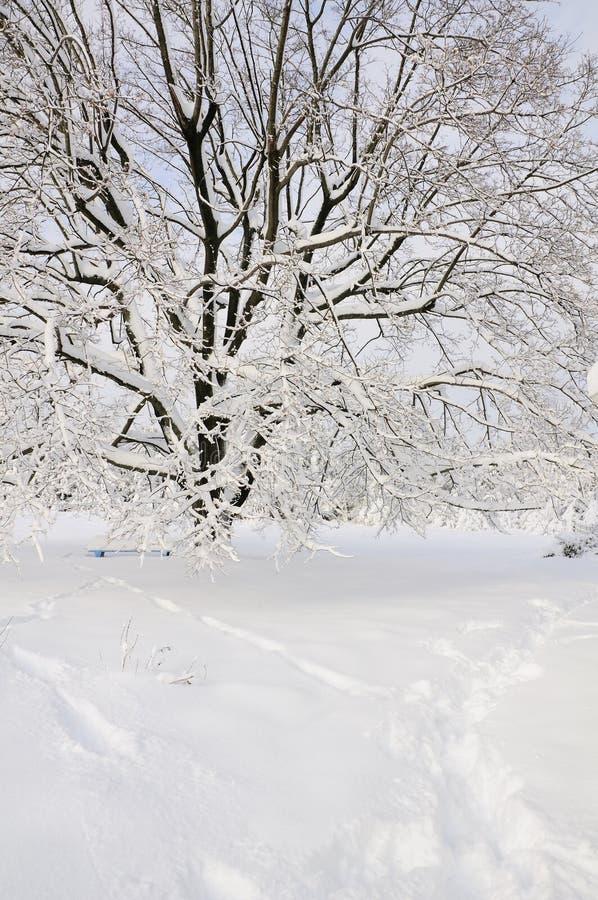 Cena da neve imagem de stock royalty free