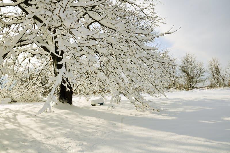 Cena da neve imagens de stock