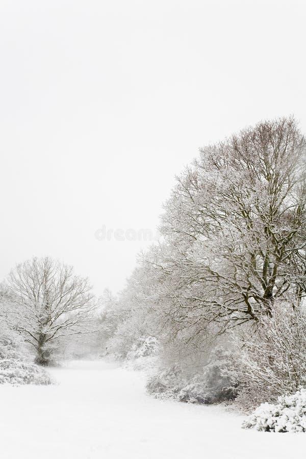 Cena da neve da floresta fotos de stock