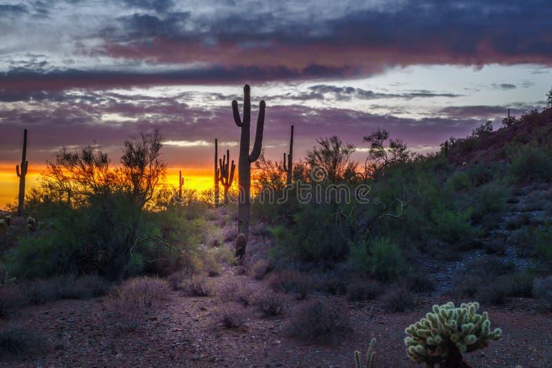 Cena da noite de Phoenix o Arizona após o por do sol fotografia de stock