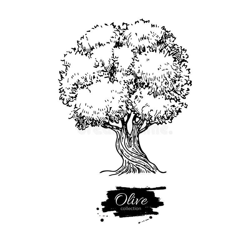 Cena da noite Ilustração desenhada mão do vetor Desenho botânico do vintage O estilo antigo gravou o objeto isolado ilustração do vetor