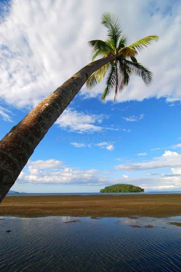 Cena da praia da palmeira imagem de stock
