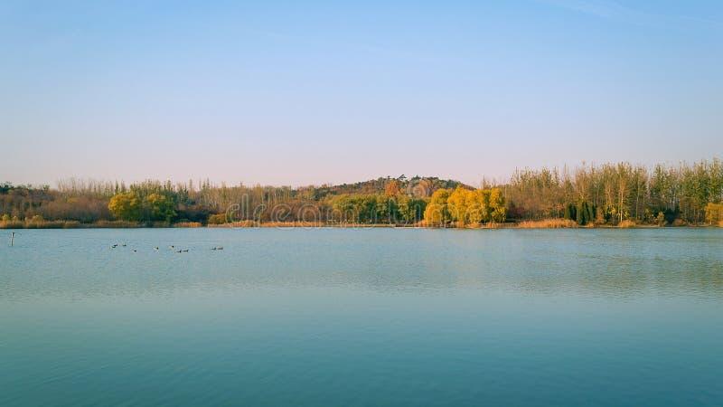 cena da queda do lago com Autumn Trees 2 fotos de stock