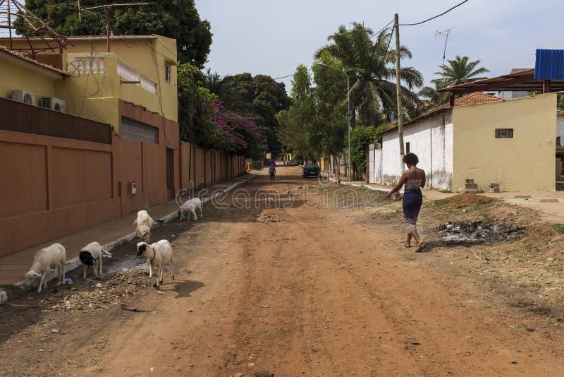 Cena da rua na cidade de Bissau com uma jovem mulher que anda em uma estrada de terra e em cabras, em Guiné-Bissau imagem de stock royalty free