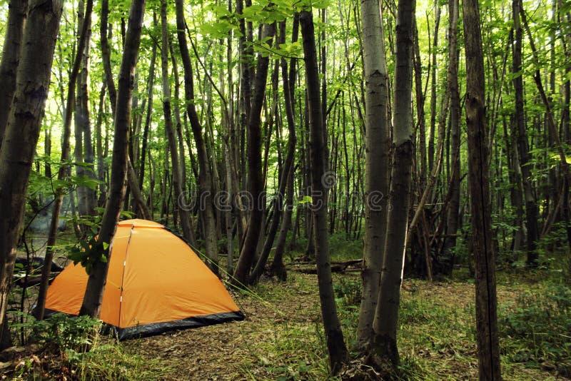 Cena de acampamento: barraca alaranjada nas madeiras calmas imagem de stock