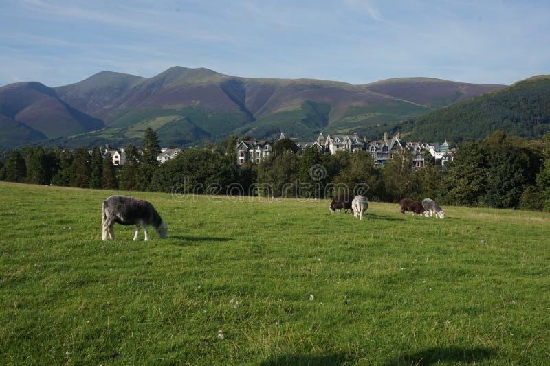 A cena de casas BRITÂNICAS do norte ajustou-se nas montanhas e nas árvores imagens de stock