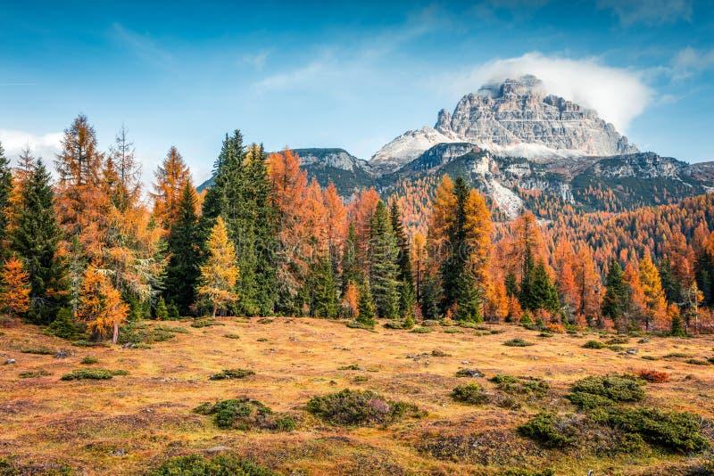Cena de manhã ensolarada do Parque Nacional Tre Cime di Lavaredo Colorida cena do outono de Dolomite Alps, Tirol do Sul, Local Au imagem de stock royalty free