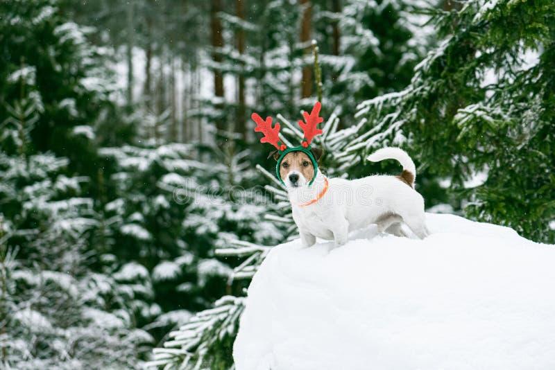 Cena de natal na floresta selvagem da Lapónia com um cão a usar um fantasma de férias de rena fotografia de stock