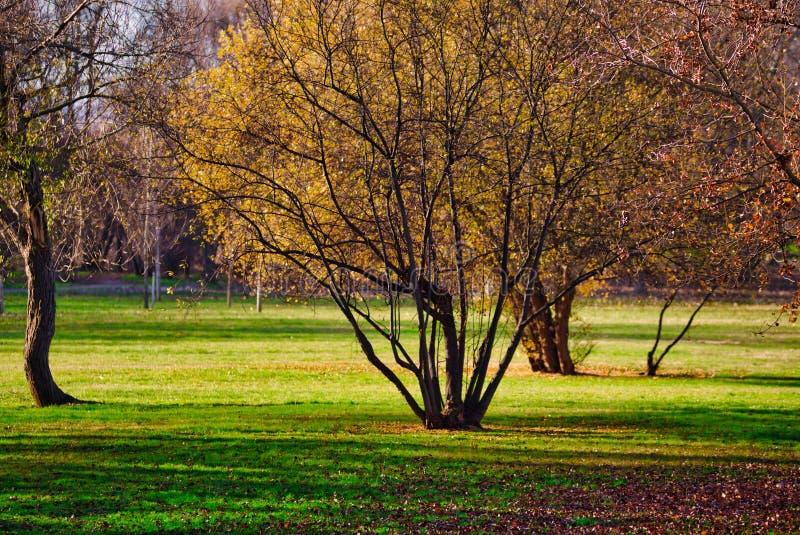 Cena de um parque público com árvores em uma manhã bonita imagem de stock royalty free