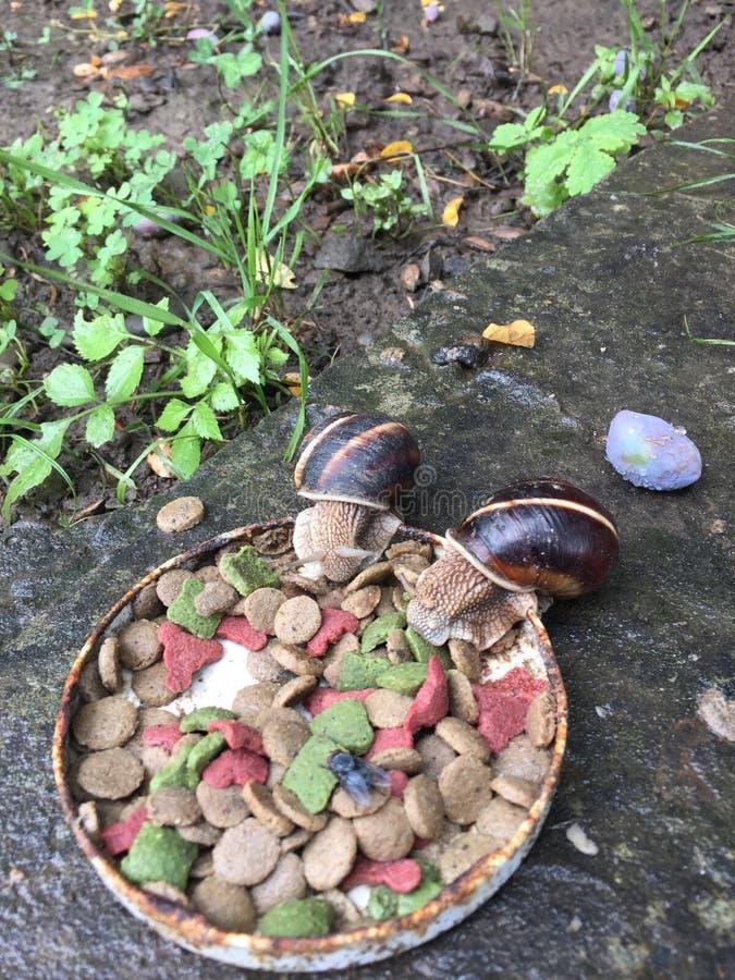 Cena delle lumache fuori fotografie stock libere da diritti