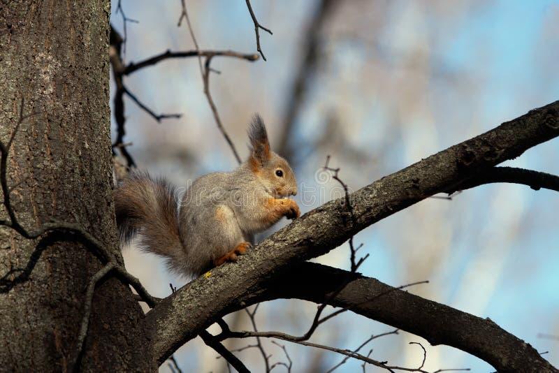 Cena dello scoiattolo fotografia stock