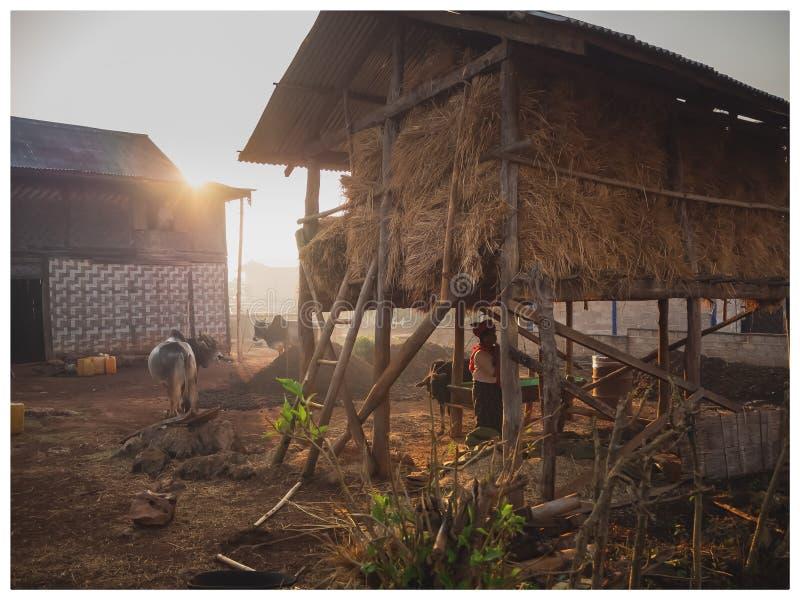 Cena do camponês no nascer do sol, Kalaw, Myanmar imagem de stock