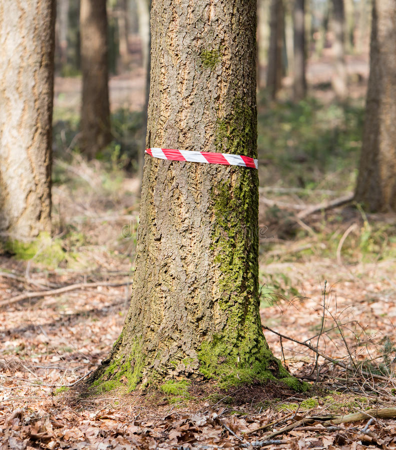 Cena do crime nas madeiras imagem de stock royalty free