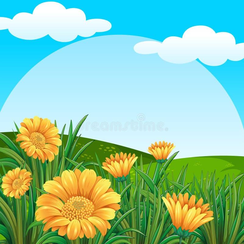 Cena do fundo com as flores amarelas no campo ilustração royalty free