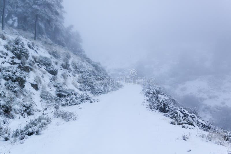 Cena do inverno Árvores cobertos de neve na floresta do inverno com luz mágica, país das maravilhas do inverno foto de stock