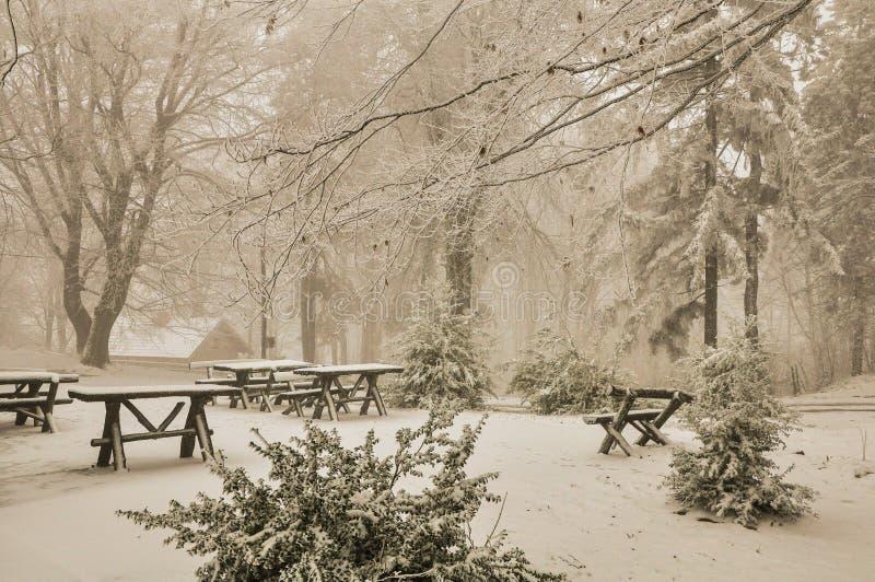 Cena do inverno fotos de stock royalty free