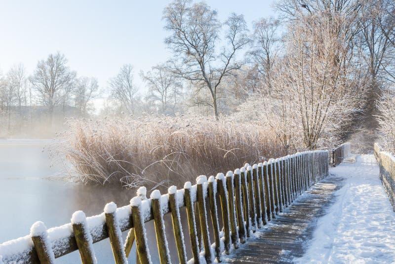 Cena do inverno com junco coberto de neve e a ponte de madeira do pé sobre o lago congelado fotos de stock