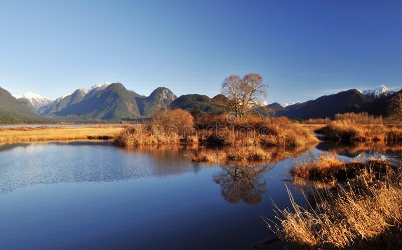 Cena do inverno do lago do pitt imagem de stock royalty free