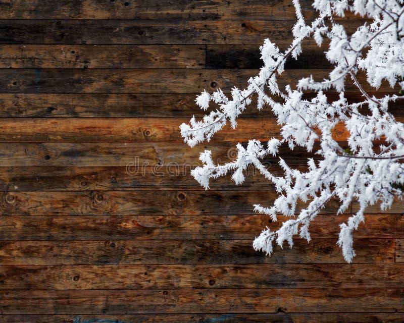 Cena do inverno, ramos congelados no fundo de madeira foto de stock royalty free