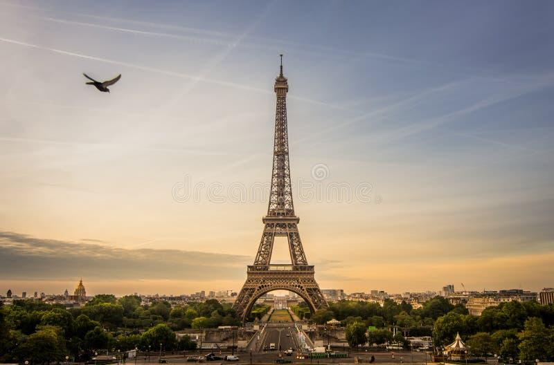 A cena do nascer do sol da torre Eiffel com um pombo está voando ao lado, Paris fotografia de stock royalty free