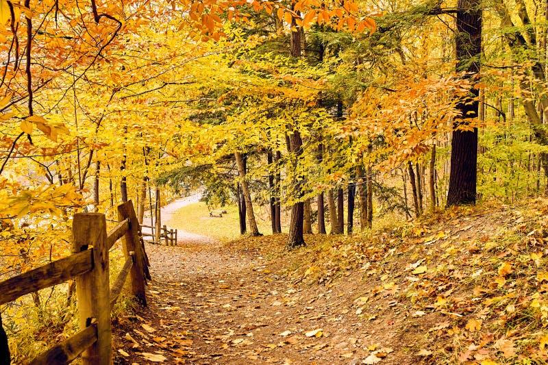 Cena do outono imagens de stock