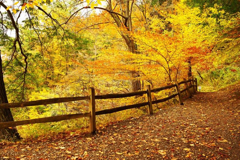 Cena do outono fotos de stock