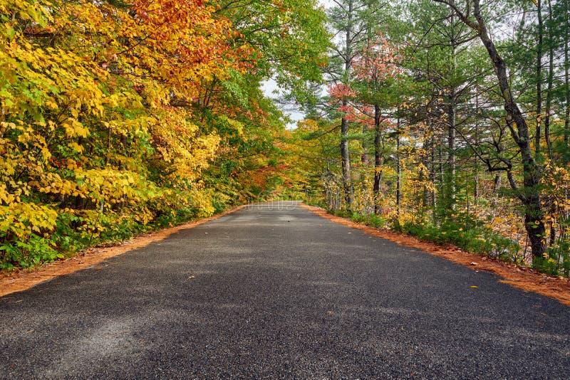 Cena do outono com estrada imagem de stock