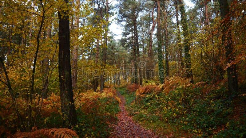 Cena do outono em uma trilha da floresta em Devon England fotos de stock
