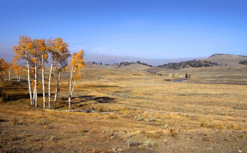 Cena do outono em Yellowstone foto de stock