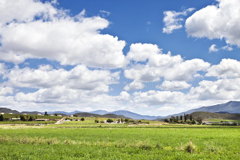 Cena do país com céu azul e alfalfa foto de stock