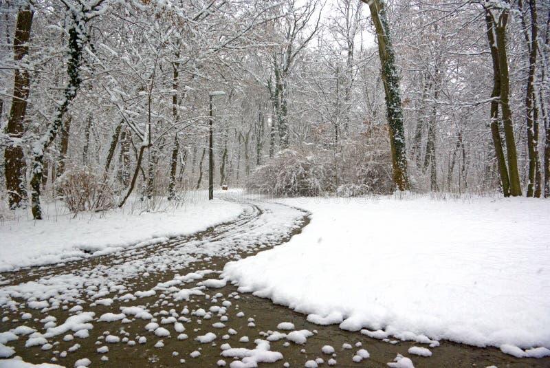 Cena do parque do inverno fotografia de stock royalty free
