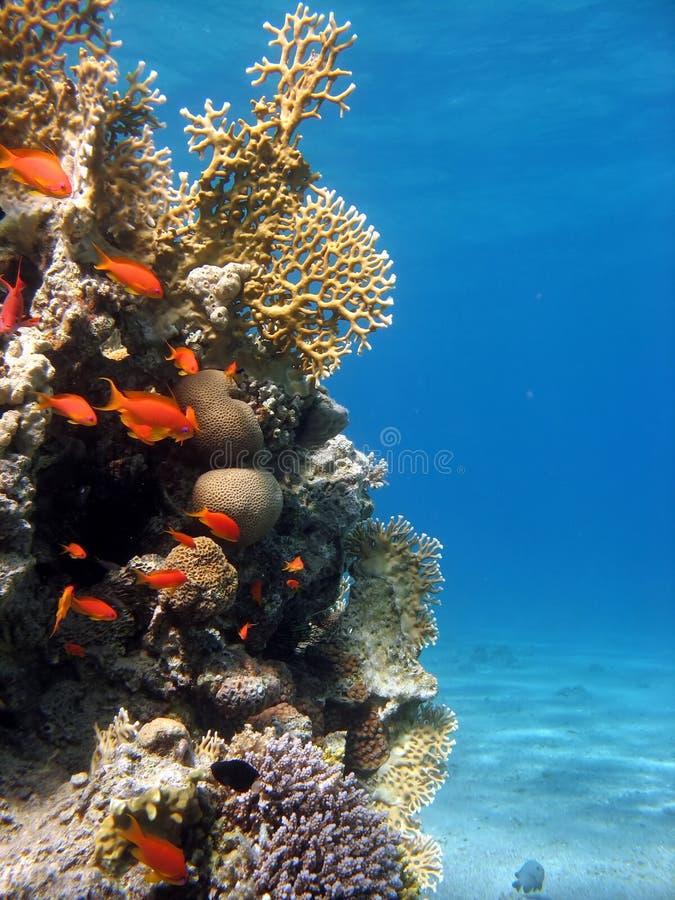 Cena do recife coral imagens de stock