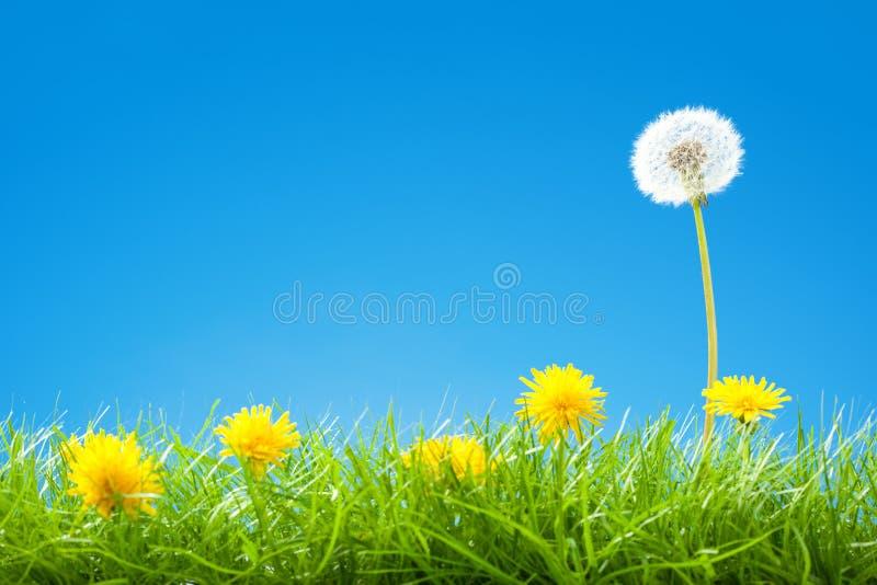 Cena do verão/mola com grama verde e o céu azul do espaço livre imagens de stock