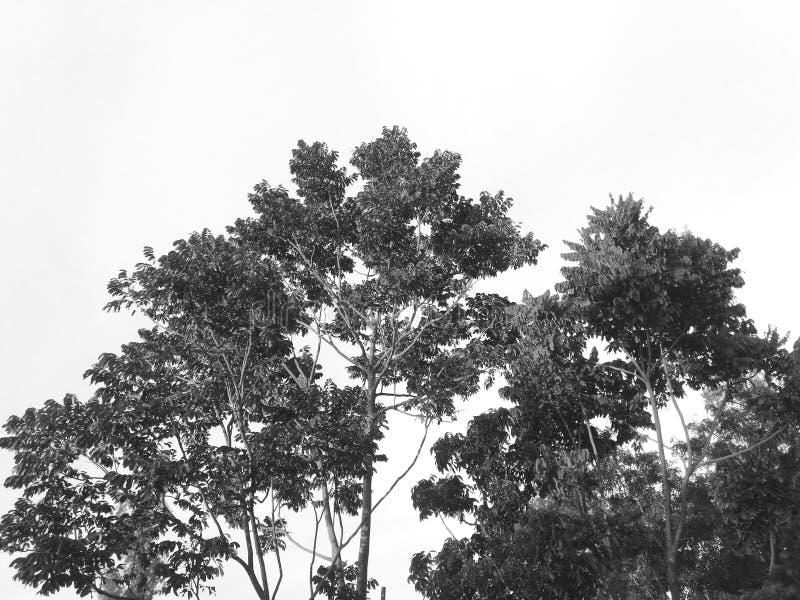 Cena exterior da natureza preto e branco bonita fotografia de stock