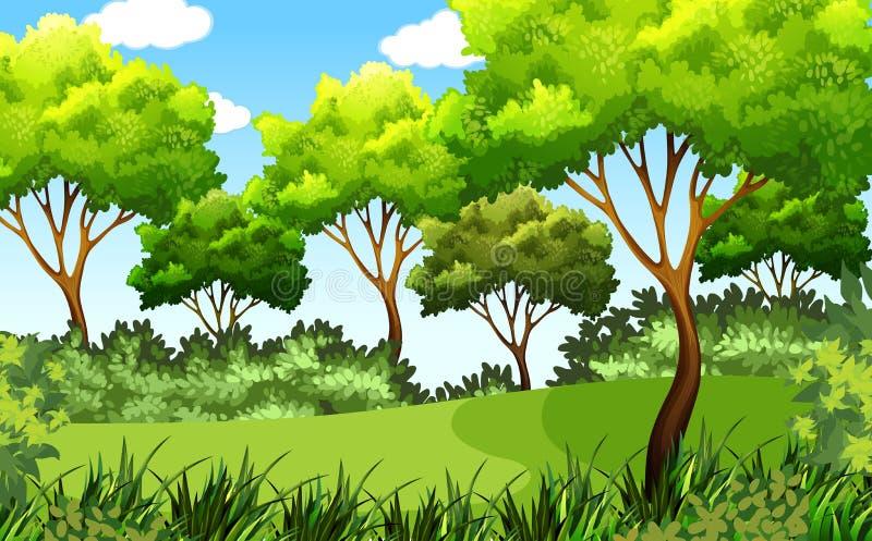 Cena exterior verde do parque ilustração royalty free